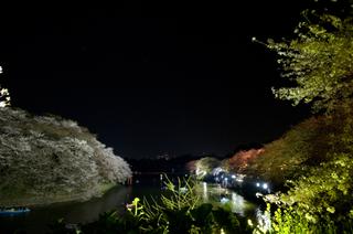 Yozakura4